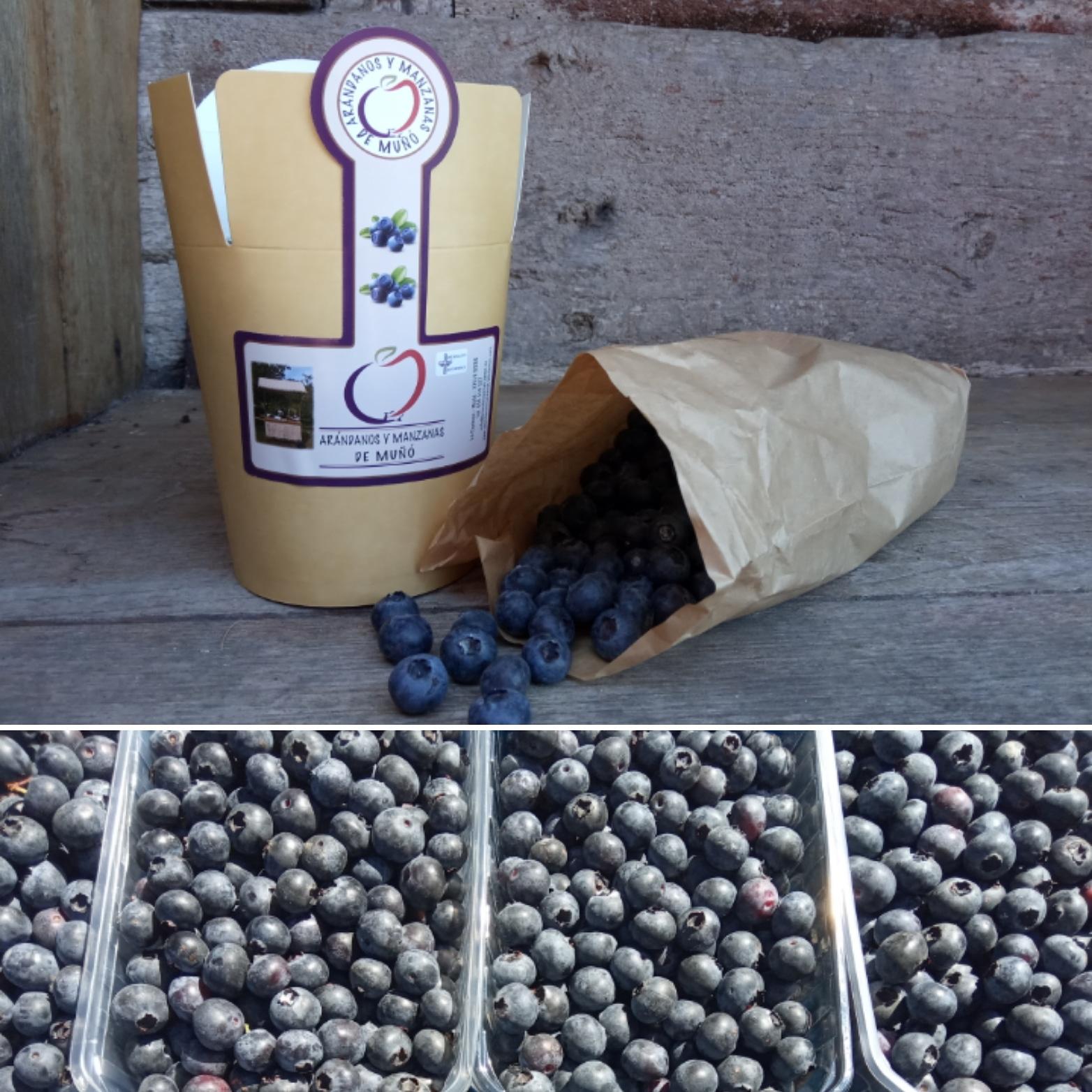 Arándanos frescos (1,5 kg)